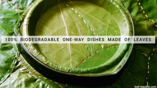leaf republic plates