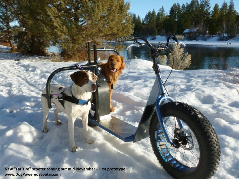 dog powered scooter