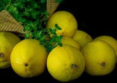 Citrusy článek