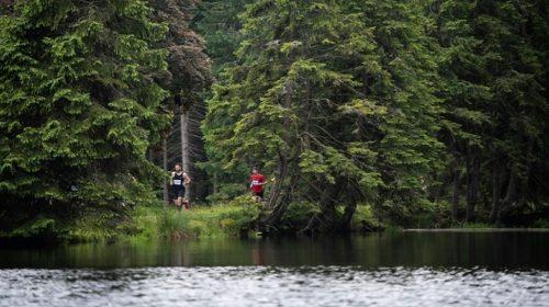 Běhej lesy